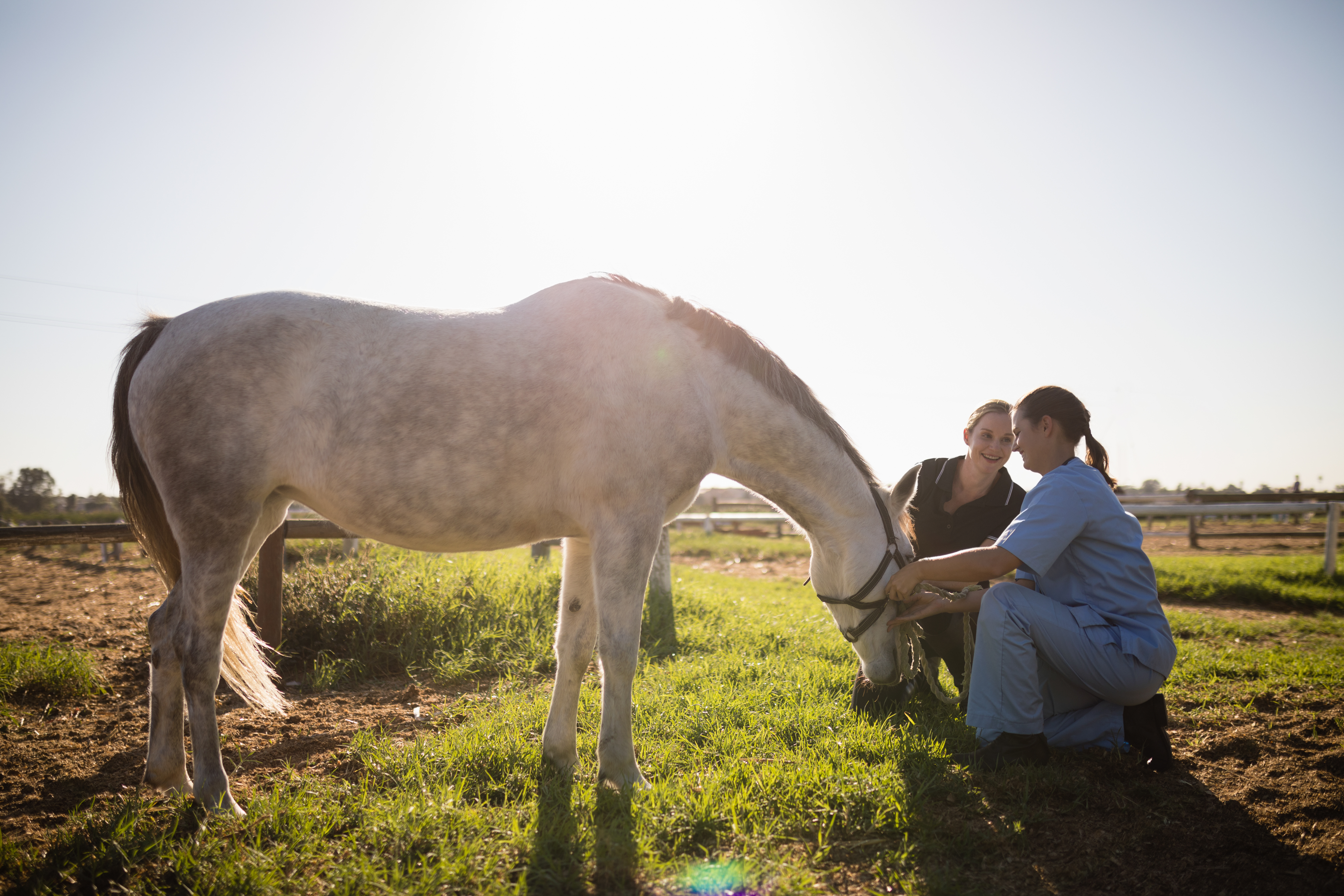 Women examining a horse